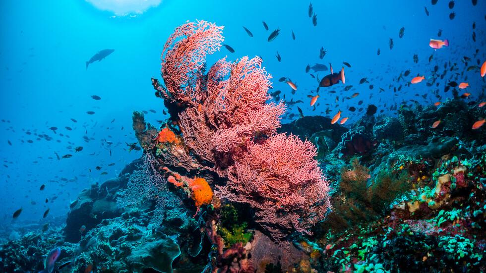 Големият Бариерен Риф -загива със завидна скорост